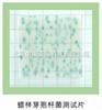 24片/包蜡样芽胞杆菌测试片 蜡样芽胞杆菌检测纸片